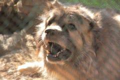 Perro en perrera Imágenes de archivo libres de regalías