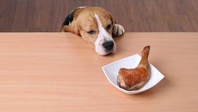 Perro en plato delantero en la tabla y la mirada del pollo del pedazo imagen de archivo libre de regalías