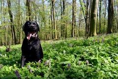 Perro en prado Fotografía de archivo libre de regalías