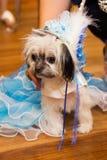 Perro en princesa Costume Foto de archivo
