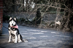 Perro en protector Imagen de archivo libre de regalías