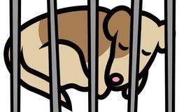 Perro en refugio Fotografía de archivo