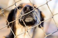 Perro en refugio Imágenes de archivo libres de regalías