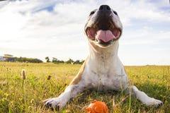 Perro en retrato del campo Imagenes de archivo
