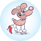 Perro en rojo Fotos de archivo libres de regalías