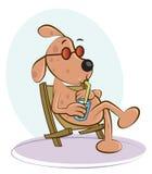 Perro en silla Fotografía de archivo libre de regalías