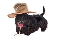 Perro en sombrero Fotografía de archivo