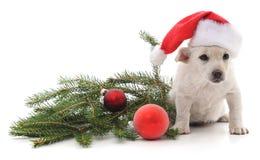 Perro en sombrero de la Navidad fotos de archivo libres de regalías