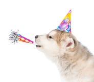 Perro en soplar del silbido del sombrero del cumpleaños Aislado en el fondo blanco imagen de archivo