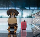 Perro en terminal de aeropuerto el las vacaciones listas para el transporte en una caja Foto de archivo libre de regalías