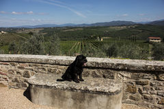 Perro en Toscana foto de archivo libre de regalías
