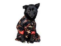 Perro en traje del chino tradicional Imagen de archivo
