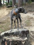 Perro en tronco de árbol foto de archivo