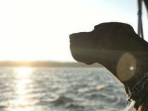 Perro en un barco Imagen de archivo