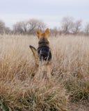 Perro en un campo fotos de archivo