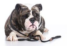 Perro en un correo Fotos de archivo libres de regalías