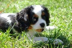 Perro en un día de verano Imagen de archivo