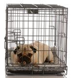 Perro en un embalaje del alambre Imagen de archivo
