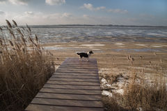 Perro en un embarcadero en la orilla de un lago congelado Foto de archivo