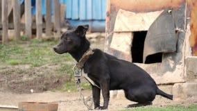 Perro en un encadenamiento El perro protege la casa almacen de metraje de vídeo
