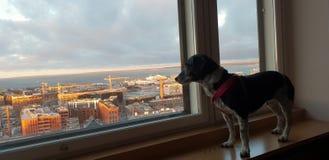 Perro en un hotel imagenes de archivo