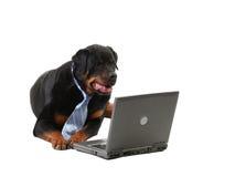 Perro en un lazo Foto de archivo libre de regalías