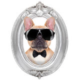 Perro en un marco Fotografía de archivo libre de regalías