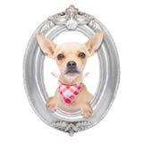 Perro en un marco Fotos de archivo