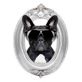 Perro en un marco Imagen de archivo