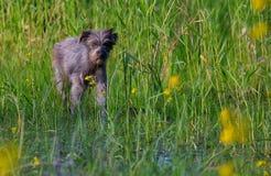 Perro en un pantano foto de archivo