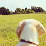 Perro en un parque Fotografía de archivo libre de regalías