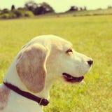 Perro en un parque Fotos de archivo