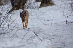 Perro en un paseo en un parque del invierno imagen de archivo