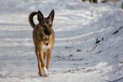 Perro en un paseo en un parque del invierno fotos de archivo libres de regalías