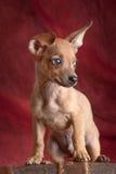 Perro en un pote Fotografía de archivo libre de regalías