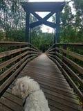 Perro en un puente imagen de archivo