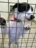Perro en un refugio del rescate en una jaula imágenes de archivo libres de regalías