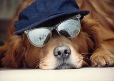 Perro en un sombrero Imágenes de archivo libres de regalías