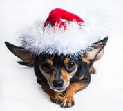 Perro en un sombrero de la Navidad Imagenes de archivo
