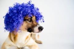 Perro en un sombrero del partido Fotos de archivo libres de regalías