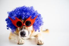 Perro en un sombrero del partido Foto de archivo libre de regalías
