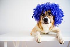 Perro en un sombrero del partido Imagen de archivo libre de regalías