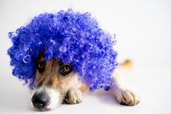 Perro en un sombrero del partido Imagen de archivo