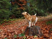 Perro en un tocón de árbol Imagen de archivo libre de regalías