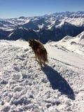 Perro en un top de la montaña Imagenes de archivo