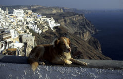 Perro en un travesaño de piedra Fotografía de archivo libre de regalías