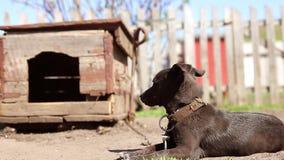 Perro en una cadena, el perro al lado de la cabina, el perro en la yarda Perro guardián en una cadena en el pueblo almacen de video