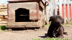 Perro en una cadena, el perro al lado de la cabina, el perro en la yarda Perro guardián en una cadena en el pueblo metrajes