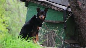 Perro en una caseta de perro cercana de cadena almacen de video