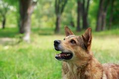Perro en una hierba fotos de archivo libres de regalías
